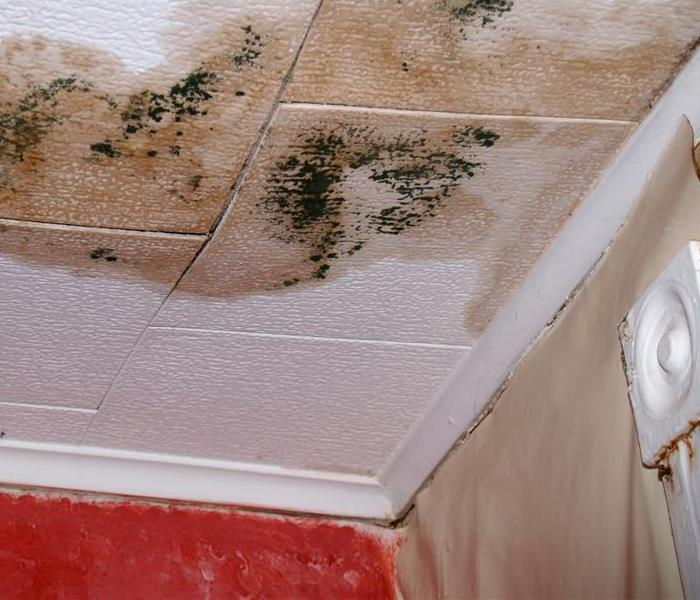Mold Remediation Mold Damage Can Ruin Investments and Memories Alike