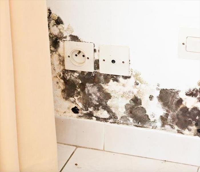 Mold Remediation Inspecting Your Home For Mold Damage in Chicago
