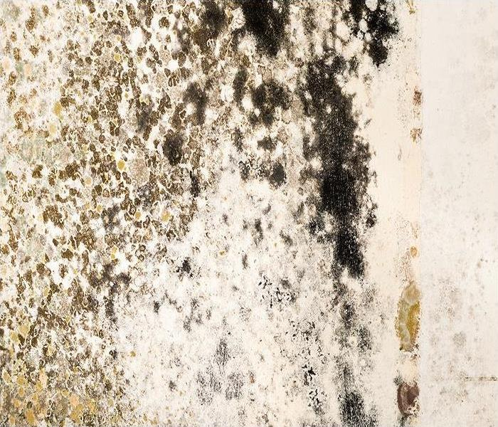 Mold Remediation Why Mold Damage To Upholstery In Chicago Homes Poses Such A Challenge