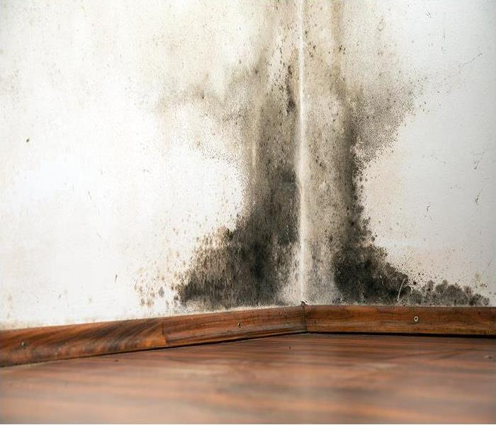 Mold Remediation Mold Damage Can Cause Significant Problems For Home Improvement Projects In Chicago