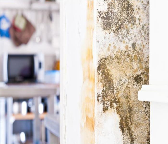 Mold Remediation Why A Detailed Mold Damage Remediation Process Can Salvage Your Chicago Property