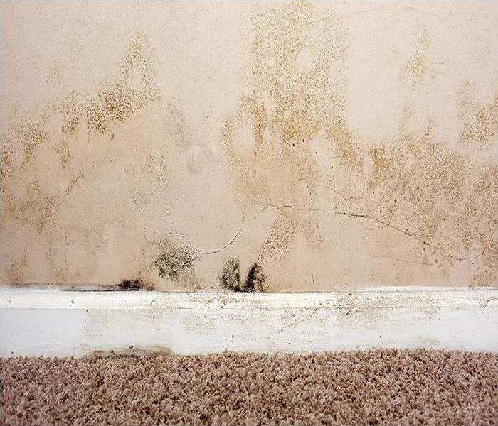 Mold Remediation Call A Specialist At The First Signs Of Mold Damage In Your Chicago Area Home