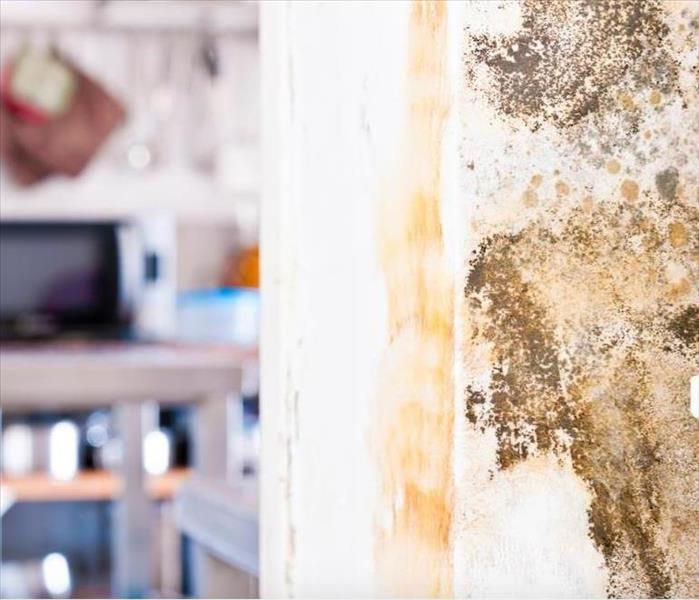 Mold Remediation How Mold Damage Remediation Returns Your Chicago Property To Its Pre-loss State