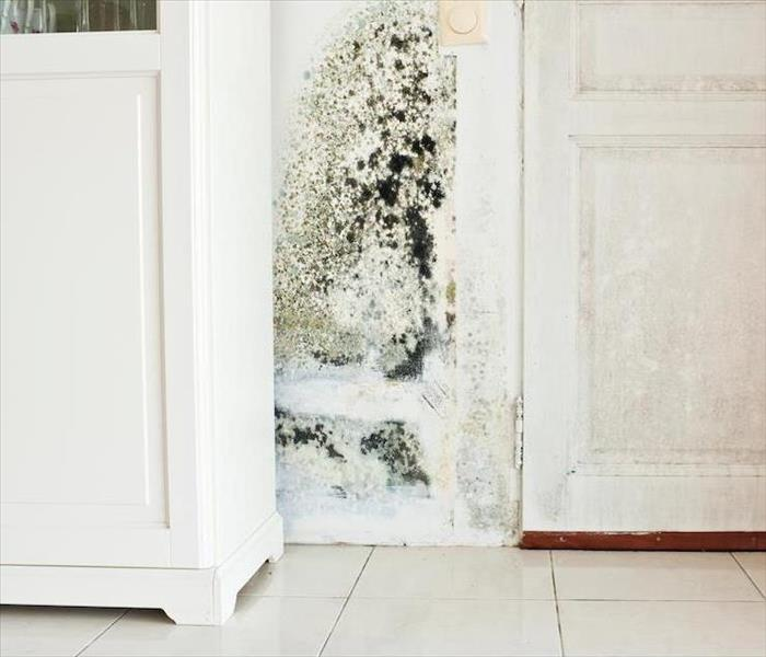 Mold In Apartment: Sources Of Indoor Moisture That Can Cause Mold Damage In